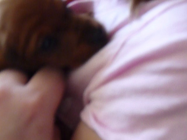 Cute video of Hanna & Puppy