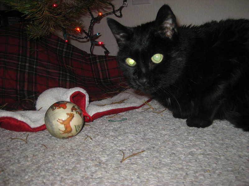 IMG_2516<br /> The conqueror gloats over slain ornament