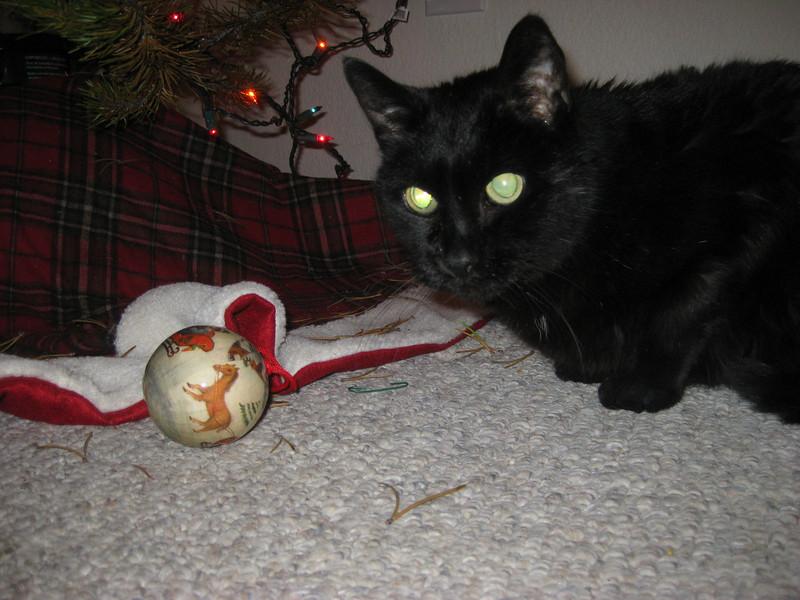 IMG_2516<br /> The conqueror gloats over slain ornament