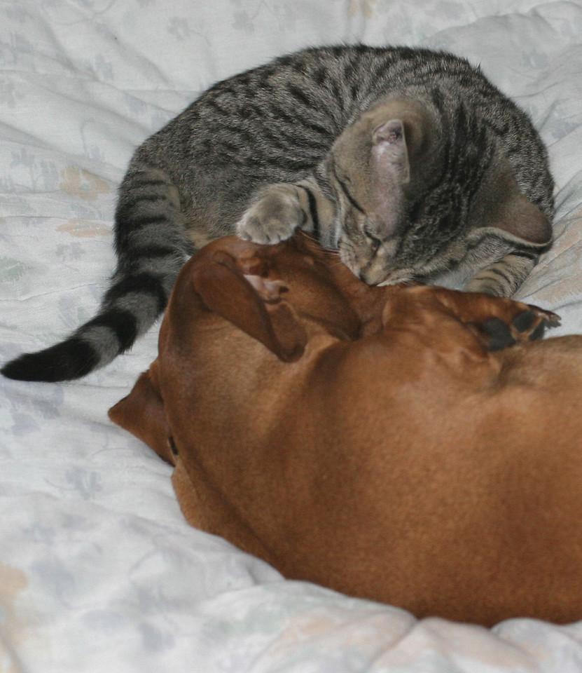 kisses for Cinnamon