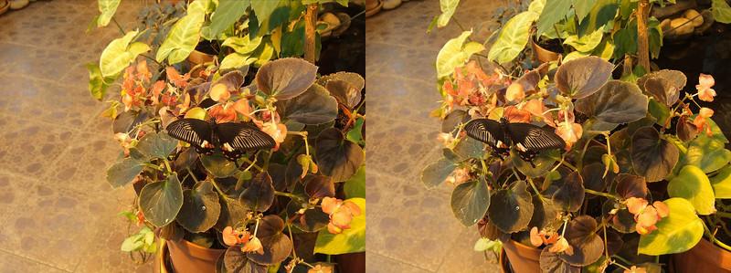 2011-03-24, Butterfly House (3D LR)