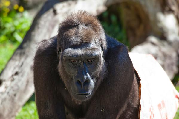 Trip to Aububon Zoo with Katy
