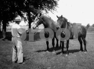 pa & saddle horses