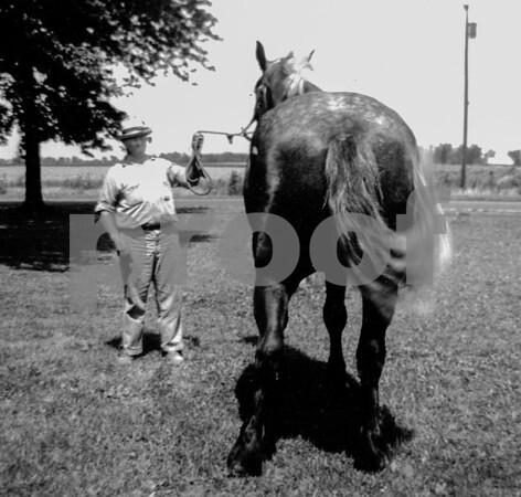 pa & horse rear