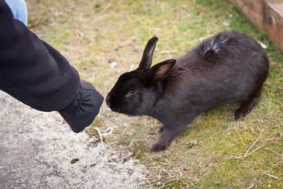 Pacific City Bunny checks Paris for treats.