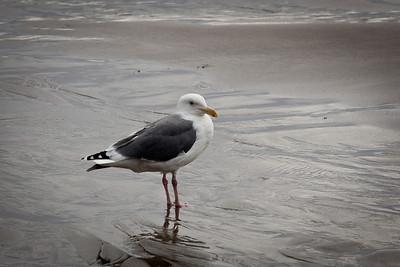 Beach-3478