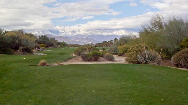 Desert Willow - Mountain View