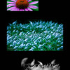 LR flowers