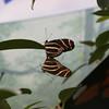 Two butterflies getting friendly.