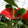 One of the many flowers inside the Conservatory of Flowers.