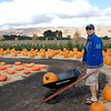 Tom loading up the wagon with pumpkins.