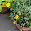 A look at a butterfly inside the butterfly area.