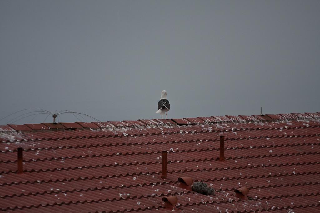 2010.07.02 Paso Robles 7