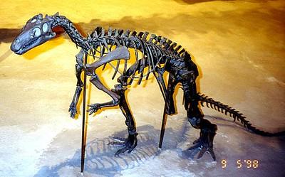 A dinosaur skeleton at the Natural History Museum