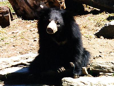 A bear at the Philadelphia Zoo.