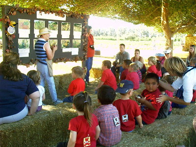 Christopher's preschool class at the Faulkner Farms pumpkin patch in Santa Paula.