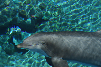 One of Sydney's favorite animals is the dolphin, so the Dolphin Habitat at the Mirage Casino was a must-see attraction. We also had the opportunity to see Christopher's favorite animal later in the day at Shark Reef.