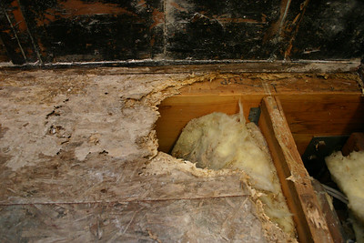 After Pat demolished the tile and mud shower, we found the reason for the cracked tiles in the shower--there was a slow leak that caused dry rot.