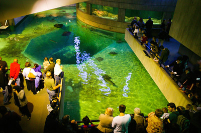 For Pat's birthday, we drove to Baltimore to see the National Aquarium. (Image taken with Canon EOS-1DS at ISO 800, f2.8, 1/10 sec and 24mm)