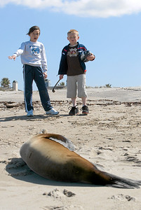 Sierra and Christopher looking at a sick sea lion that has washed ashore at Oxnard Beach. Unfortunately, it is very sick and barely able to move. (Image taken with Canon EOS-1D at ISO 200, f8.0, 1/400 sec and 70mm)