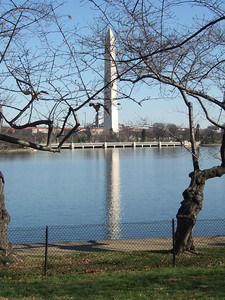 View of the Washington Monument from across the Tidal Basin. (Image taken with FinePix F10 at ISO 200, f7.1, 1/500 sec and 16.1mm)