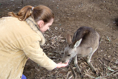 Sydney feeding a kangaroo at the Nowra Wildlife Park (08 Jul 2009) (Image taken by Kathy T. Kane with FinePix F10 at ISO 400, f2.8, 1/180 sec and 8mm)