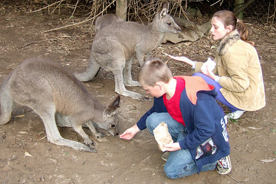 Sydney and Christopher feeding the kangaroos at the Nowra Wildlife Park (08 Jul 2009) (Image taken by Kathy T. Kane with FinePix F10 at ISO 400, f2.8, 1/170 sec and 8mm)