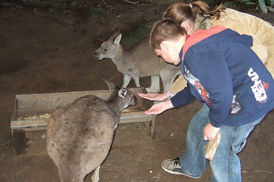 Sydney and Christopher feeding the kangaroos at the Nowra Wildlife Park (08 Jul 2009) (Image taken by Kathy T. Kane with FinePix F10 at ISO 800, f2.8, 1/100 sec and 8mm)