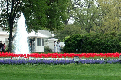 Flowers on the White House front lawn. (Image taken by Kathy T. Kane on 19 Apr 2011 with FinePix F10 at ISO 200, f5.0, 1/350 sec and 24mm)