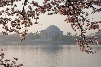 The Thomas Jefferson Memorial and cherry blossoms. This year's National Cherry Blossom Festival honors the 100-year anniversary of the gift of trees (Image taken by Patrick R. Kane on 23 Mar 2012 with Canon EOS 5D at ISO 100, f32.0, 1/20 sec and 110mm)