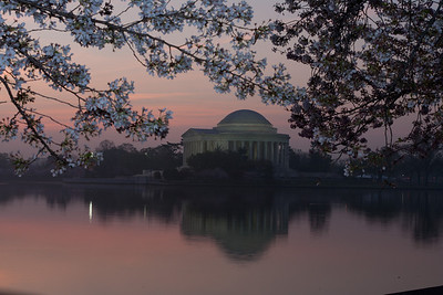 The Thomas Jefferson Memorial and cherry blossoms at sunrise. This year's National Cherry Blossom Festival honors the 100-year anniversary of the gift of trees (Image taken by Patrick R. Kane on 23 Mar 2012 with Canon EOS 5D at ISO 100, f22.0, 1/1 sec and 70mm)