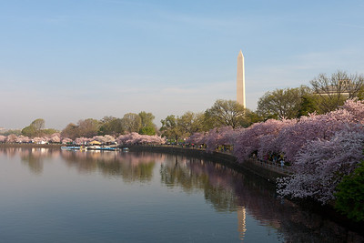 The Washington Monument and cherry blossoms. This year's National Cherry Blossom Festival honors the 100-year anniversary of the gift of trees (Image taken by Patrick R. Kane on 23 Mar 2012 with Canon EOS 5D at ISO 100, f22.0, 1/20 sec and 35mm)