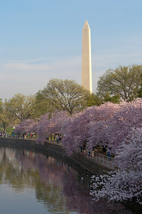 The Washington Monument and cherry blossoms. This year's National Cherry Blossom Festival honors the 100-year anniversary of the gift of trees (Image taken by Patrick R. Kane on 23 Mar 2012 with Canon EOS 5D at ISO 100, f29.0, 1/13 sec and 70mm)