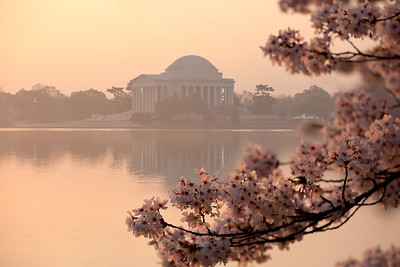 The Thomas Jefferson Memorial and cherry blossoms. This year's National Cherry Blossom Festival honors the 100-year anniversary of the gift of trees (Image taken by Patrick R. Kane on 23 Mar 2012 with Canon EOS 5D at ISO 100, f5.0, 1/250 sec and 125mm)