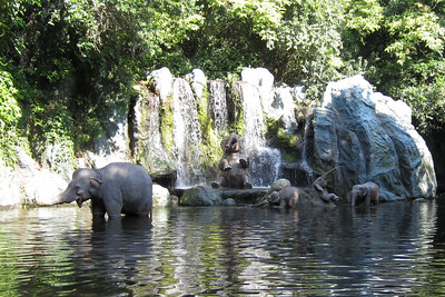 The Jungle Cruise at Disney's Magic Kingdom (Image taken by Kathy L. Kane on 27 May 2012 with Canon PowerShot ELPH 100 HS at ISO 0, f2.8, 1/160 sec and 5mm)