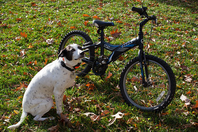 "Dolly checking out Christopher's old Giant MTX 125, 20"" boy's mountain bike, which he sold on Craigslist"