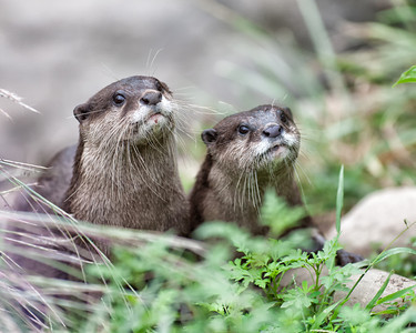 National Zoo (01 Sep 2012)