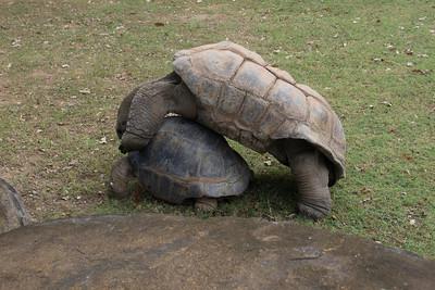 National Zoo (photo taken by Kathy T. Kane on 28 Jul 2013)