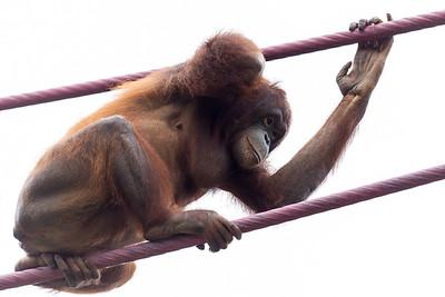 National Zoo (28 Jul 2013)