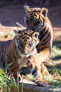 National Zoo (28 Dec 2013)