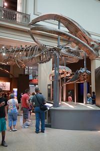 Natural History Museum (24 Jun 2016)