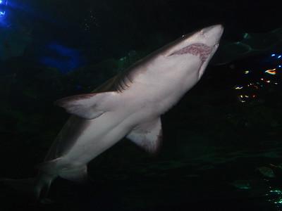 Ripley's Aquarium of Canada (10 Aug 2017)