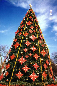 The National Christmas Tree. We saw this tree as well as one for each of the 50 states in the Ellipse after our tour of the White House. I've got to say that this is one of the ugliest trees I've ever seen!
