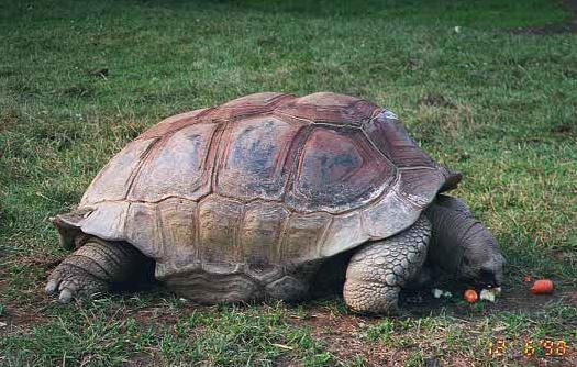 A tortoise at the National Zoo.