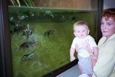 Kathy and Sydney Kane loved the long neck turtles at the National Zoo.