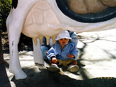 Sydney is checking out the cow exhibit at the Philadelphia Zoo.