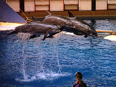 The dolphin show at the National Aquarium in Baltimore.