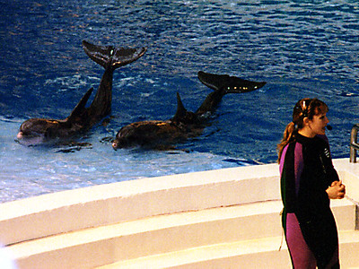 A dolphin show at the National Aquarium in Baltimore.