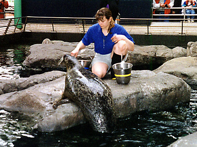 A seal (or sea lion?) being fed at the National Aquarium in Baltimore.