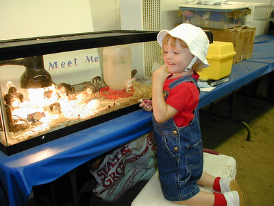 Sydney checking out the chicks at the King City Fair